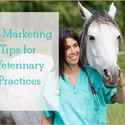 veterinary marketing tips